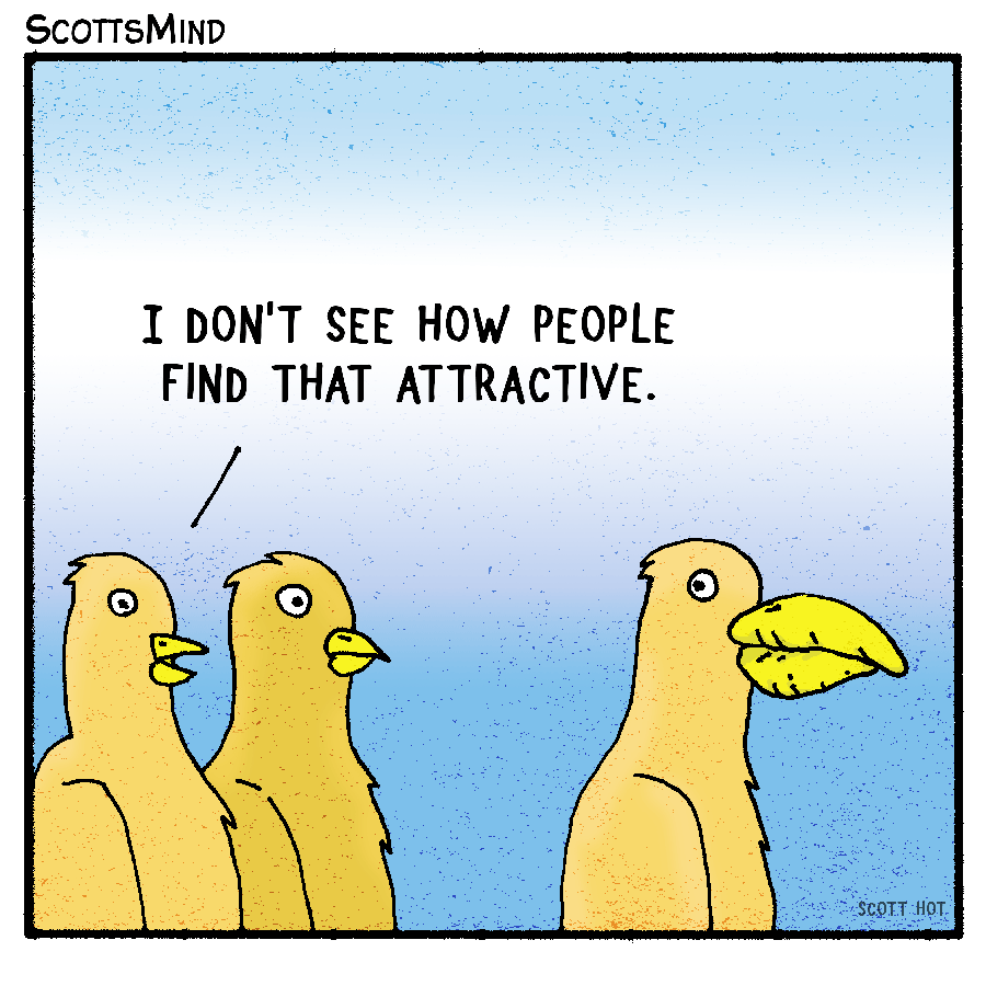Attractive Birds Cartoon