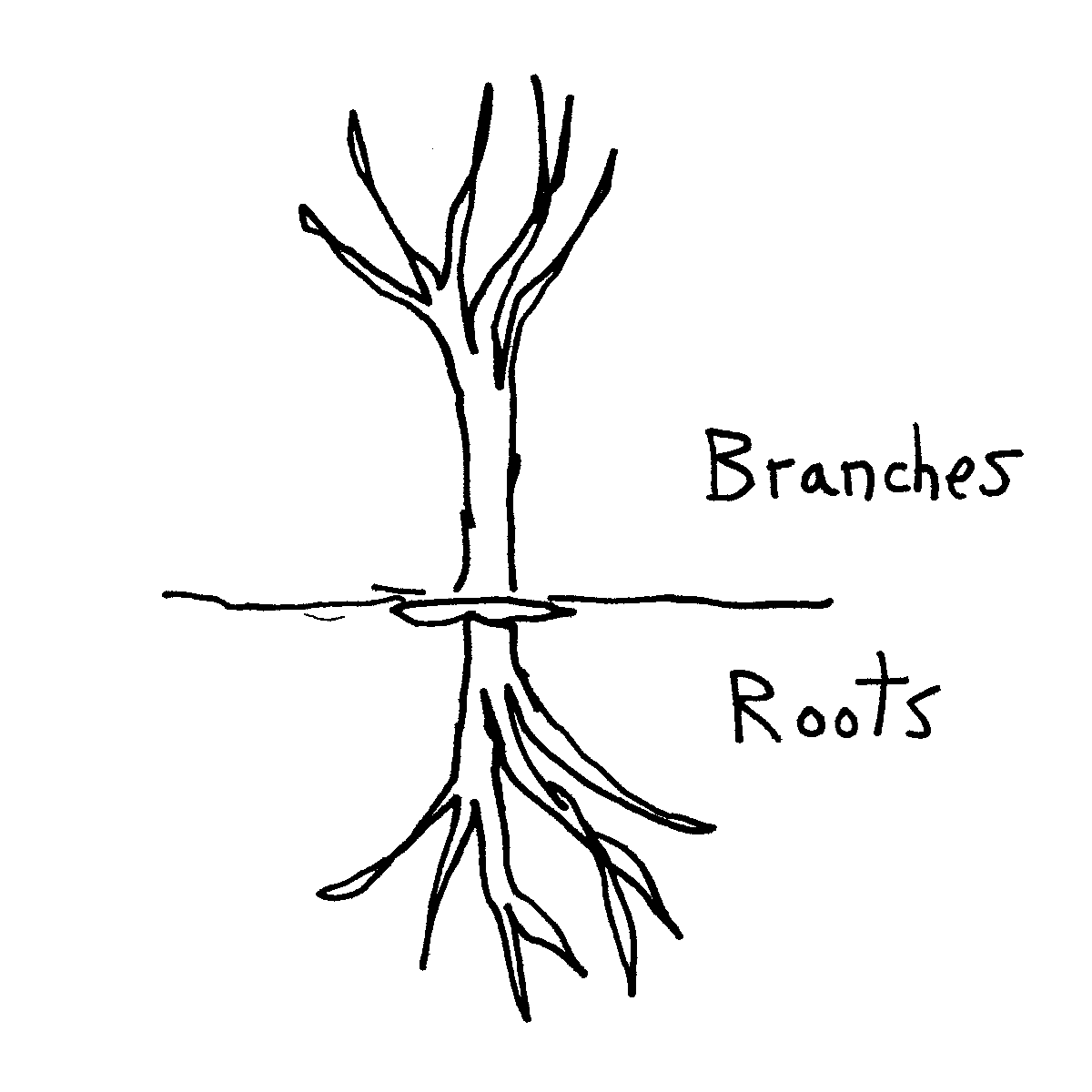 roots branches cartoon doodle